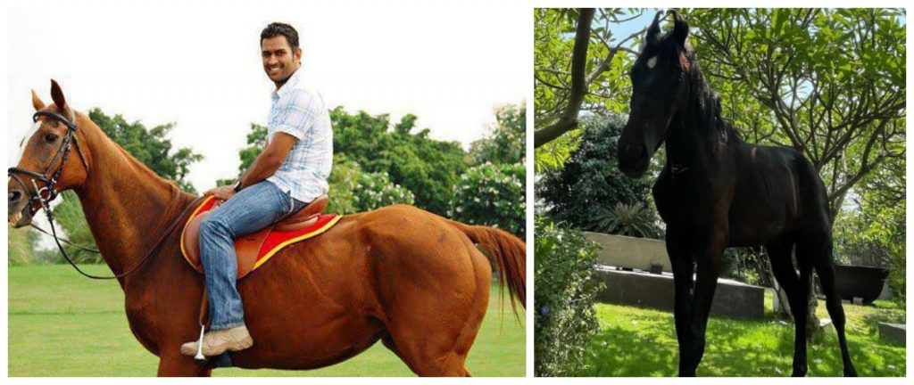MS Dhoni welcomes 'Chetak' the Black Stallion to his exclusive club